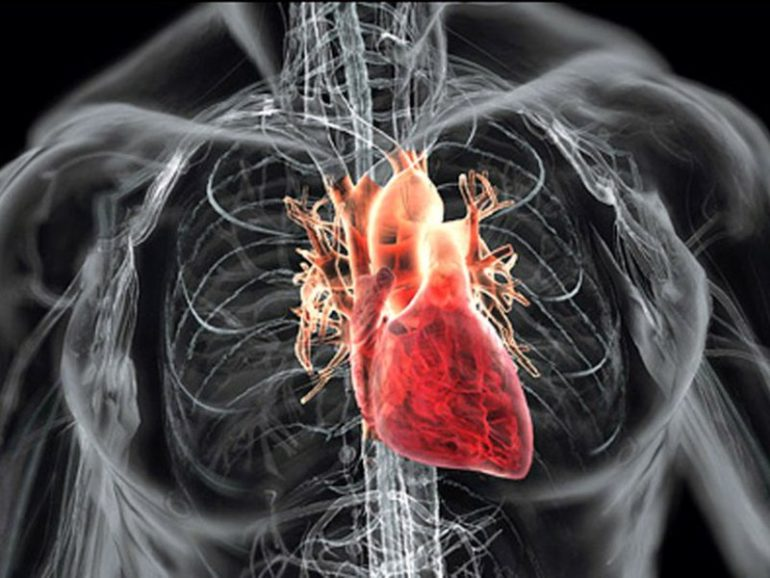 Работящее сердце постоянно перекачивает кровь