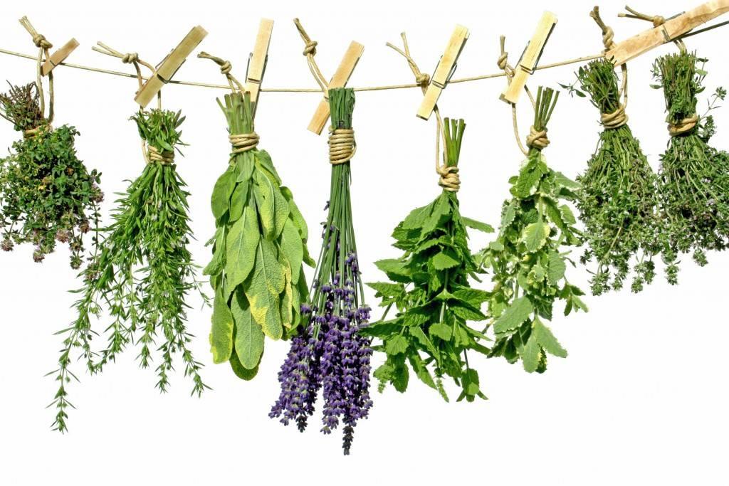 Травы лекарственные от многих заболеваний