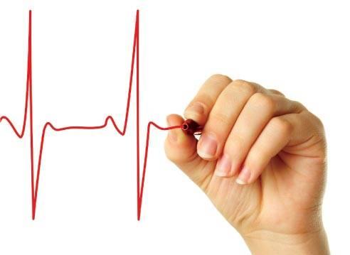 Как работает сердце